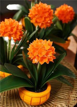 卧室放什么植物最旺财?你选对了吗?