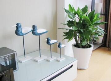 植物摆放位置和家居风水的秘密联系