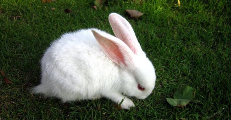 属猪和属兔的婚姻怎么样 属猪和属兔的婚姻相配吗