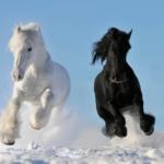 马五行属什么 马属相和什么属相最配
