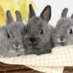 属羊和属兔的合不合 属羊和属兔的合不合财运
